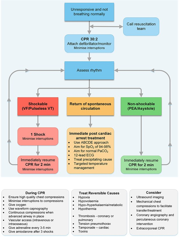 Adult advanced life support algorithm